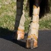Insect Barrier Leg Wrap - By Pro Equine